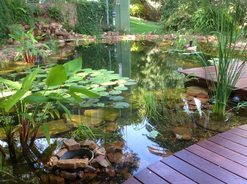 Natural swimming ponds the owner builder network for Making a natural pond