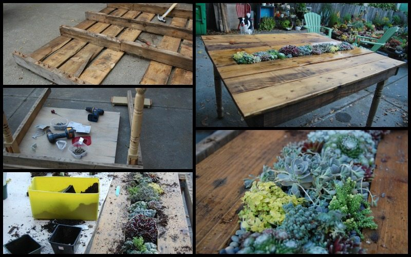 Succulent Table from Old Pallets and Table Legs