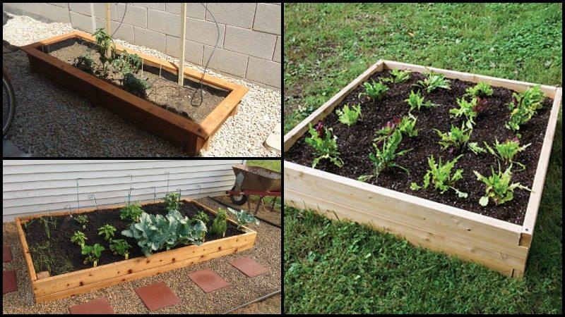 DIY Raised Garden Beds Montage