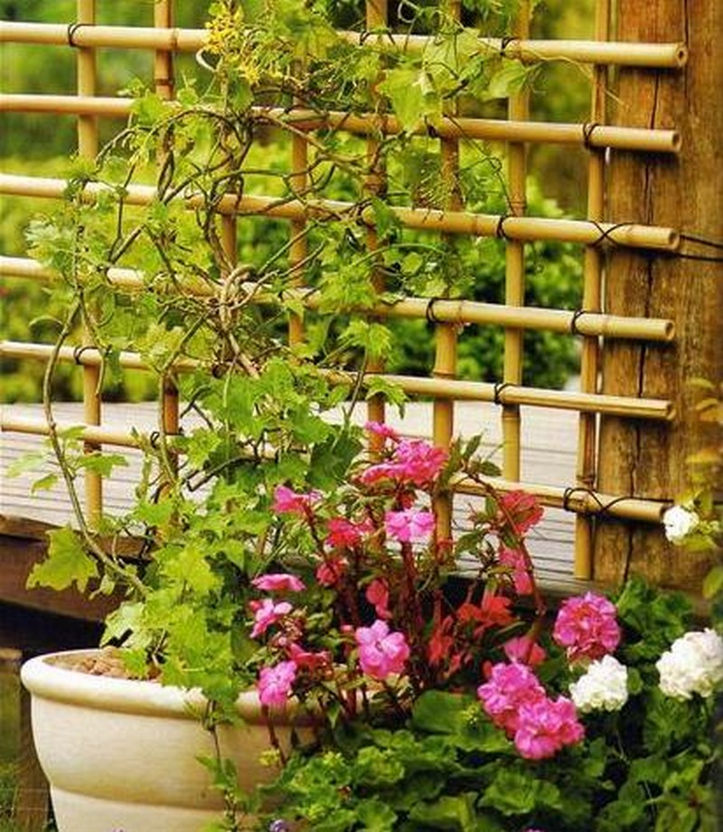 diy bamboo trellis the owner builder network. Black Bedroom Furniture Sets. Home Design Ideas