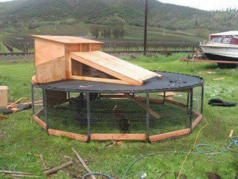 Diy trampoline chicken coop the owner builder network for Diy movable chicken coop