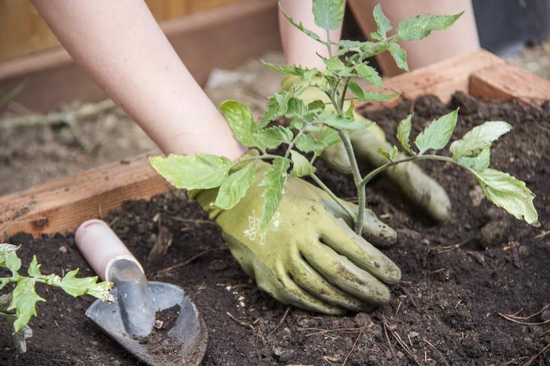 Diy Greenhouse Raised Garden Bed The Owner Builder Network