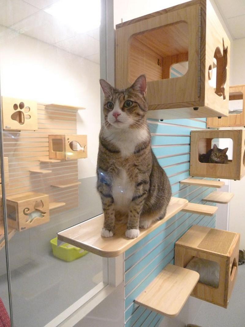 Modular cat climbing wall 18