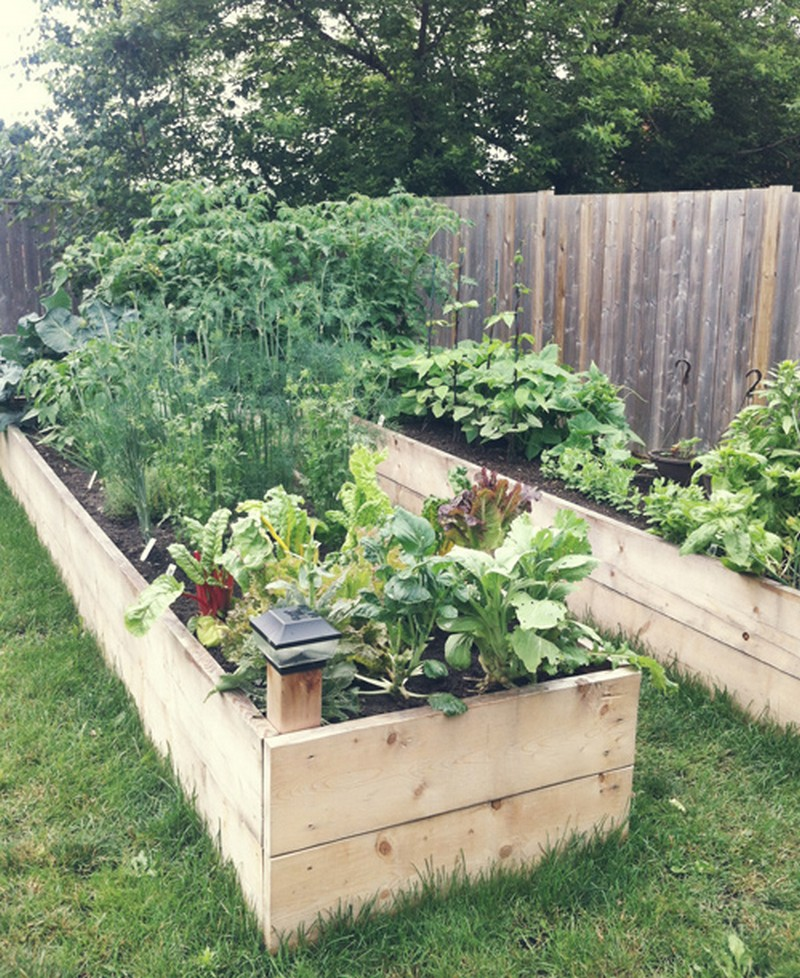Simple Vegetable Garden Ideas For Your Living: DIY Easy Access Raised Garden Bed