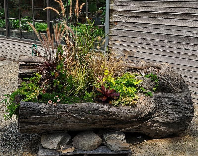Image gallery stump planters for Hollow tree trunk ideas