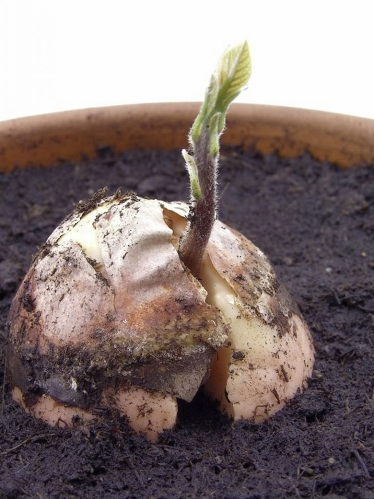 foods you can re grow yourself from kitchen scraps the owner builder network. Black Bedroom Furniture Sets. Home Design Ideas