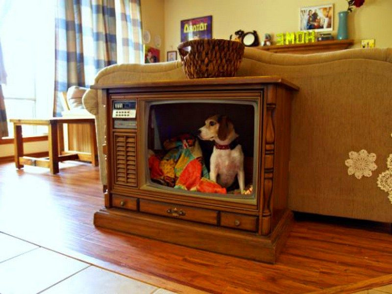 Fabulous Dog Bed Design Ideas Your Pets Will Enjoy The