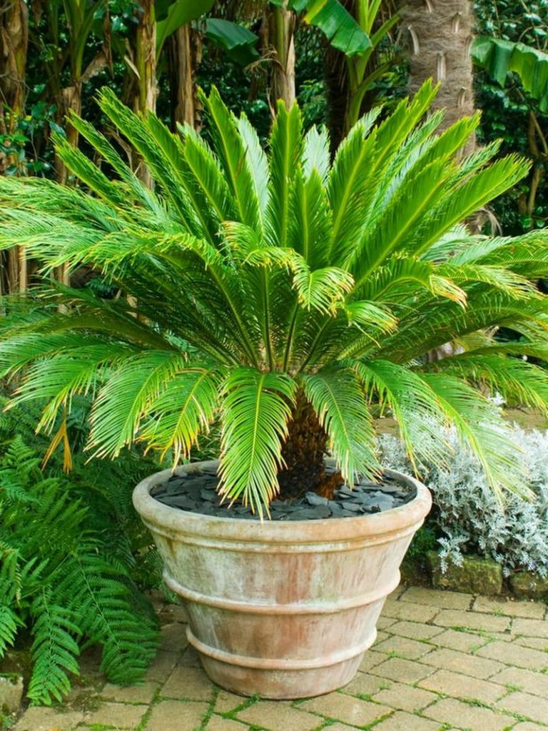 Houseplants That Can Survive Your Constant Neglect The