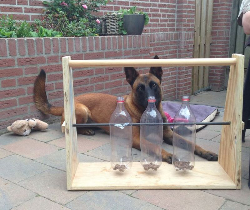 Spin-out dog treat game   The Owner-Builder Network