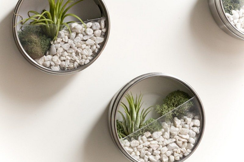 Simple Ideas For Making Your Own Adorable Diy Terrariums The Owner Builder Network