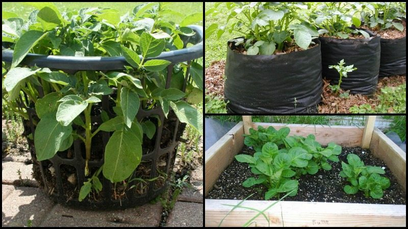 DIY Potato Planter Ideas