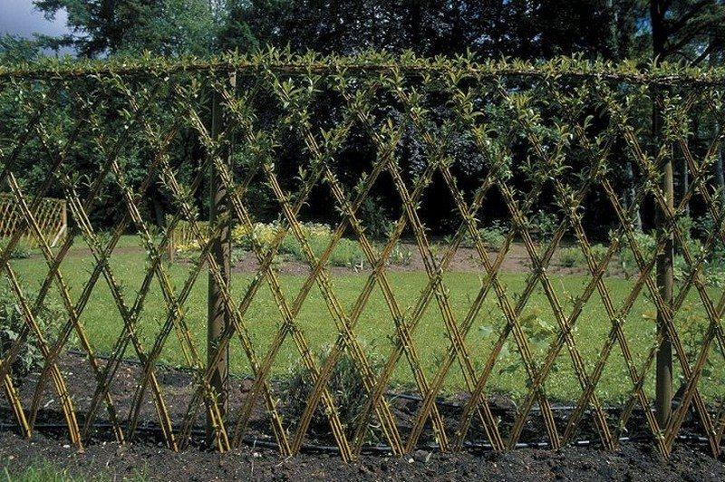 Живой забор на даче фото