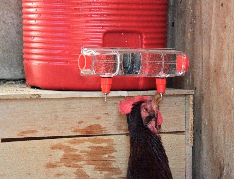 Easy Diy Chicken Coop
