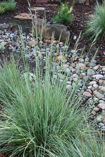 Dry creek bed garden California