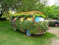 Flower Power :-)  What is the first song lyric that comes into your head when you see this?