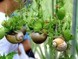 Is this justice or what! Never, in a month of Sundays, would I have thought to re-purpose snail shells. Great idea?  BTW, before you squish your next snail, make sure you are not killing a predator. Yes, there are snails whose diet is other snails!