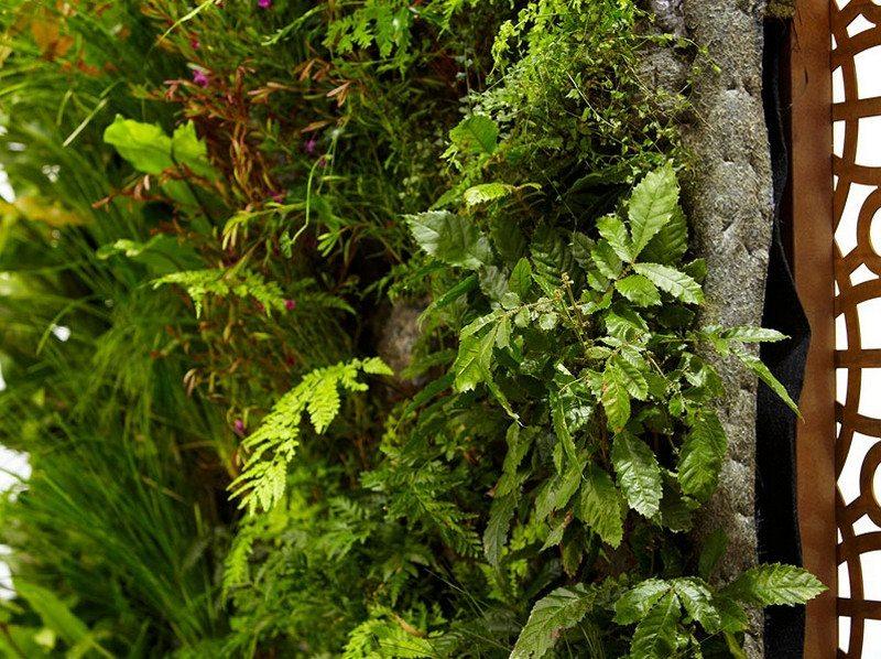 Phillip Johnson Landscapes Vertical Garden 2 The Owner Builder