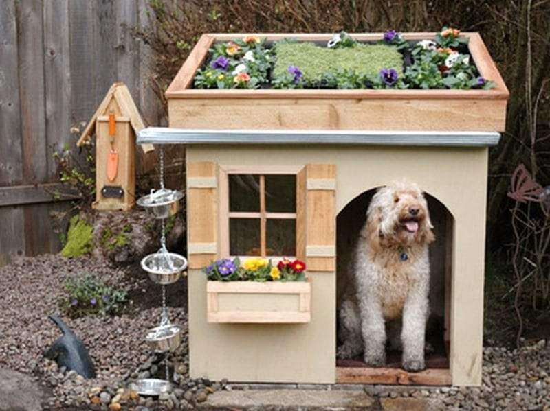 Hey look! I've got a green roof too!  FAIL or WIN? Let us know in the comments section.