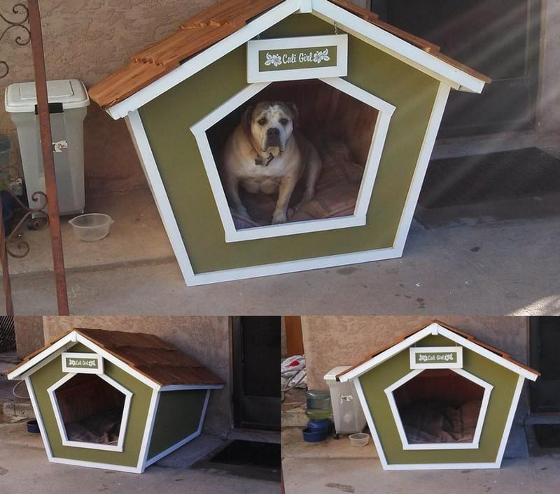 Fan @Jeremy Stearns sent these images of his recent project. Don't be fooled by the expression on Cali's face. She always looks a little lost :) Thanks for sharing Jeremy (and Cali).