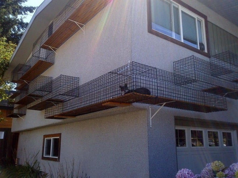 Now THIS is a cat run! Given the feral cat challenge here in Australia - and undoubtedly, many other countries, I have enormous respect for the owner. As the saying goes, 'if you can't look after your pet, don't get one!'