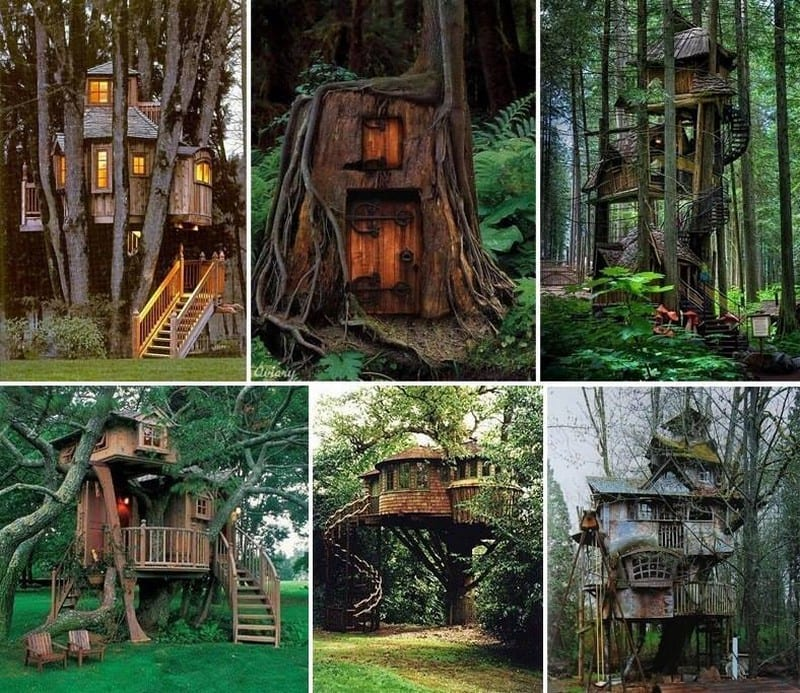 Which one of these would you like in your yard?