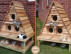 If your cats love to spend their time outdoors, then this cottage could be for them.