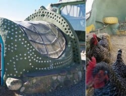 Earthship meets chicken coup!
