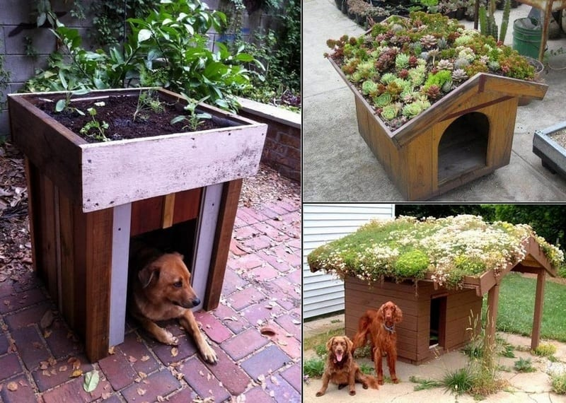 Even the kennels are going green!  You liked the one we posted last week so here are some more :)  The living roof improves the aesthetics and provides insulation against hot or cold weather!