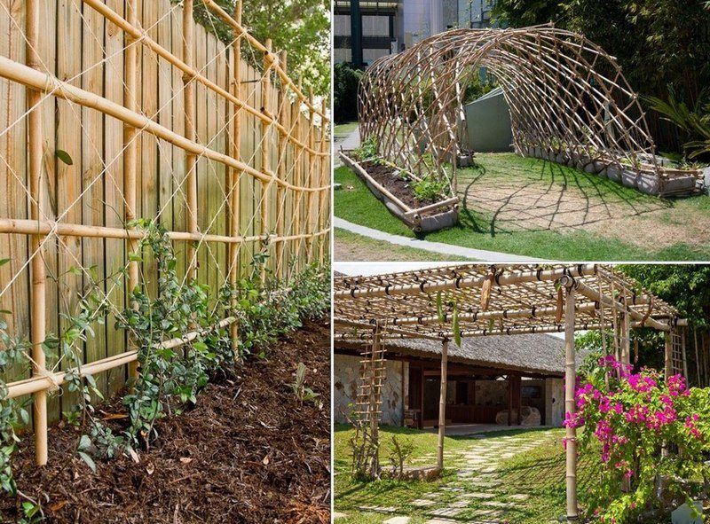 These are great examples of how you can use bamboo to build a trellis.