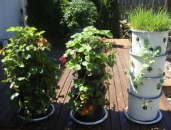 Recycled Pots Vertical Garden - Washington Lawns