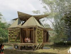 Blooming Bamboo - Vietnam