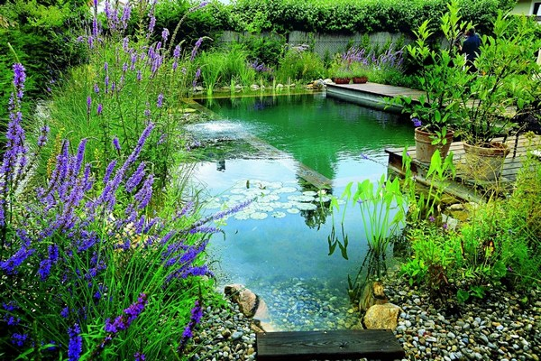 Natural Swimming Pond