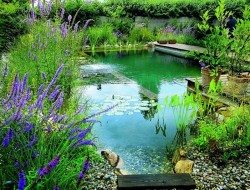 What a wonderful way to recreate nature in your backyard!