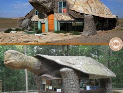 Tortoise Buildings