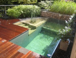 Another pool converted to a swimming pond! It's beautiful and it's kind to the body AND the environment.