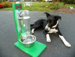 DIY Pet Water Bowl - The Owner-Build Network