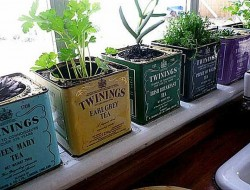 Twinings Vintage Tea Tins - The Micro Gardener