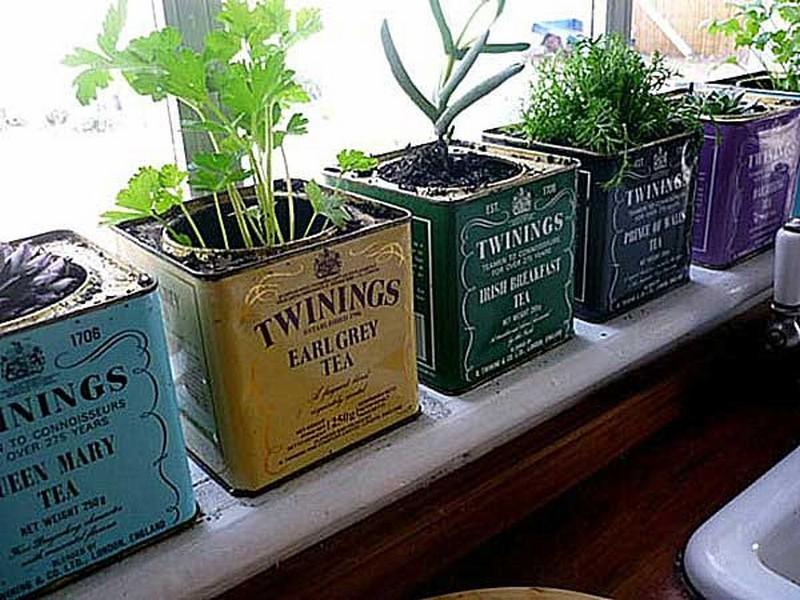Twinings Vintage Tea Tins - The Micro Gardener