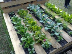 Or to grow your veges.  The possibilities are only limited by your imagination :)