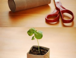 Use toilet paper rolls to make seed starter pots.