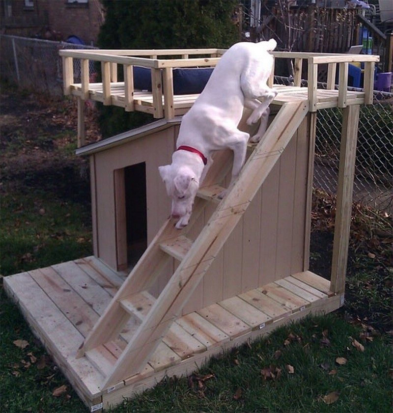 every dog deserves a viewing deck!