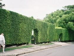 Hedge Fences