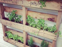 Here's another great use for the humble pallet - an instant vertical garden for herbs.