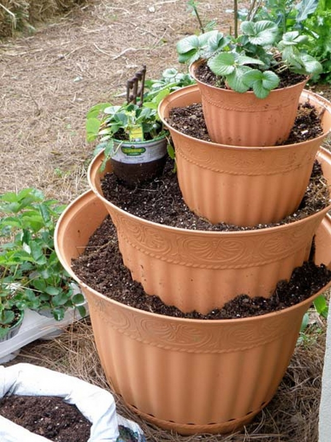 Как вырастить клубнику на балконе.