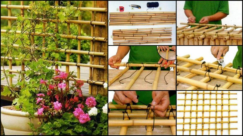 BambooTrellis
