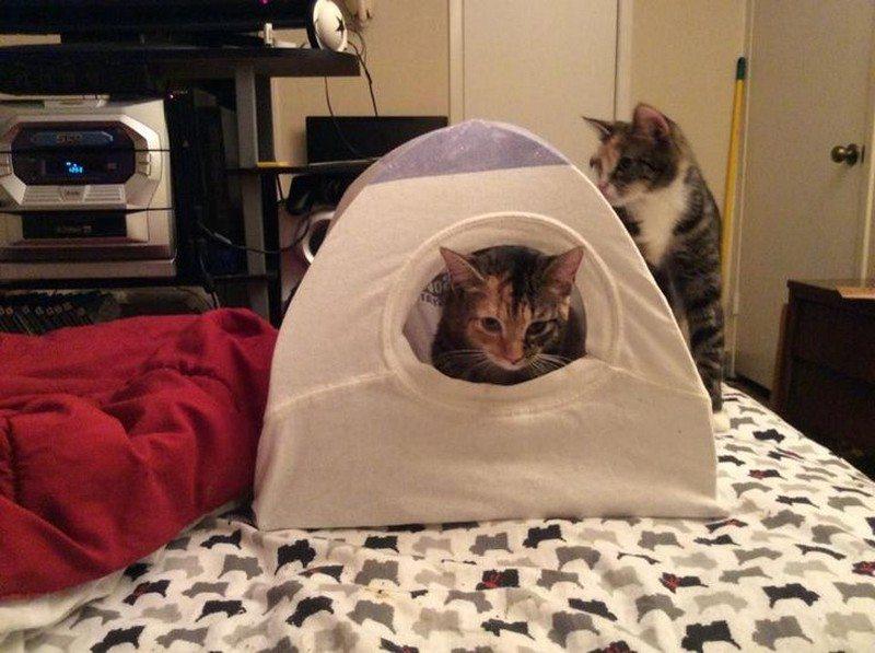 DIY Cat Tent & DIY Cat Tent | Cat House Hanger Pets