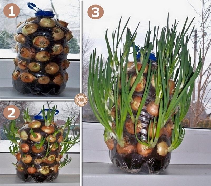 DIY Vertical Onion Planter