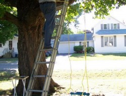 DIY Chair Tree Swing - Hang