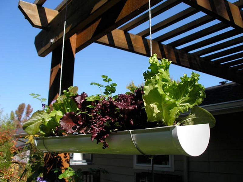 Diy hanging gutter garden the owner builder network for Rain gutter planter box