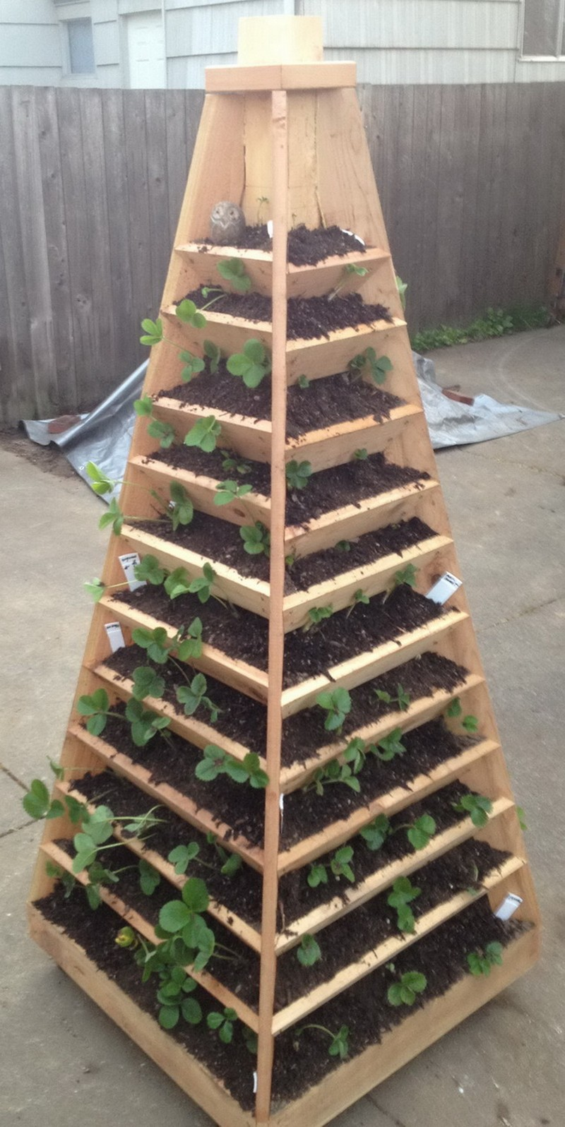 DIY Strawberry Pyramid